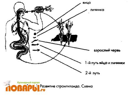 Кулинарный форум ПОВАРЫ.